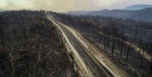 Yanan ormanlar için fidan bağışı