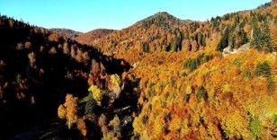 Türkiye'nin en büyük blok ormanlarına girişler yasaklandı