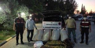 390 kilo Antep fıstığı çalan şüpheliler, jandarmanın kovalaması sonucu yakalandı