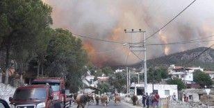 Milas'ta alevler yerleşim bölgesine ulaştı, Gökbel köyü boşaltıldı