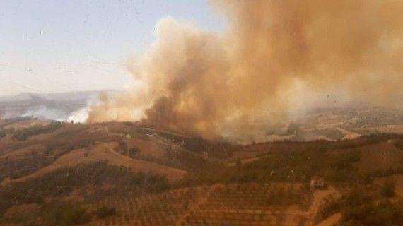 Adana'da anız yangını ormana sıçradı