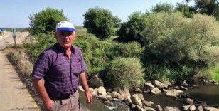 Saklı cennet 'Acarlar Longozunu' besleyen derelerde balık ölümleri çoğaldı