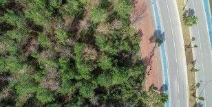 Antalya'da ormanlara giriş yasağı 30 Eylül'e kadar uzatıldı