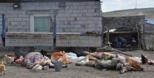 Kars'ta şüpheli hayvan ölümleri