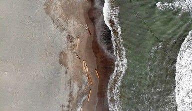 Ayancık'ta sel sularının denize sürüklediği tomruklar Samsun sahillerinde
