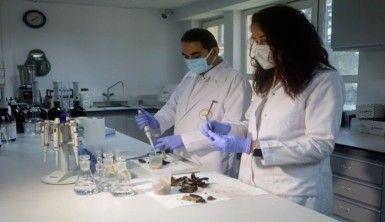 İstanbul İl Tarım ve Orman Müdürlüğü, midye avcılığını böyle denetliyor
