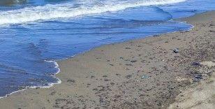 Samandağ'da petrol atıklarının temizliği 7 gündür sürüyor