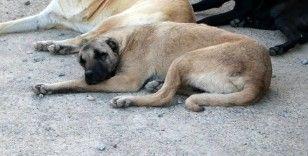 Köpeği sopayla yaralayan kişiye 3 yıla kadar hapis istemi