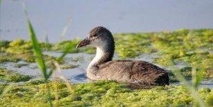 Ağrı Dağı Milli Parkı, kuş popülasyonuyla dikkati çekiyor
