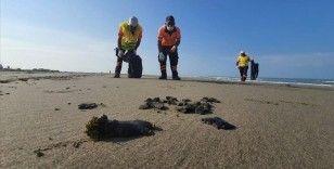 Mersin'de Suriye kaynaklı petrol sızıntısına ilişkin temizlik çalışması başlatıldı