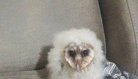 Peçeli baykuş 3 aylık bakım sonrası tabiata salındı