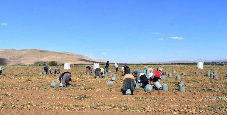 Bayburt'ta patates hasadına başlandı