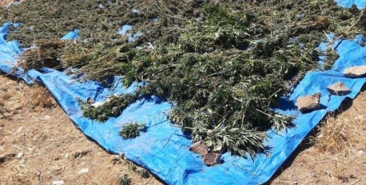 Bingöl'de kurutulmaya bırakılmış vaziyette 78 kilo kubar esrar ele geçirildi