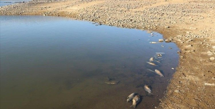 Van'da artan balık ölümleri inceleniyor