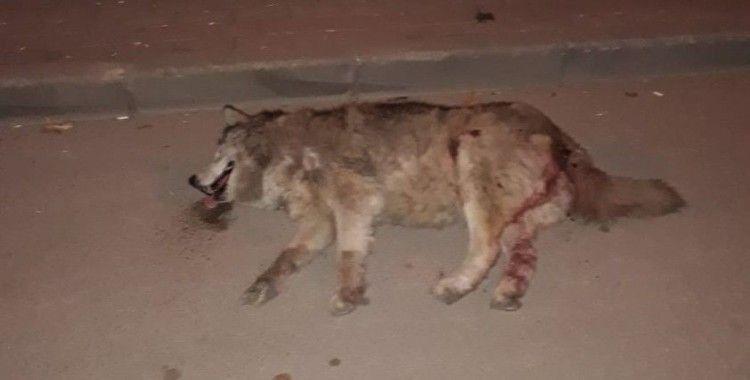 Bursa'da vicdansızlık kamerada...Kamyonetiyle ezdiği köpeği bırakıp kaçtı