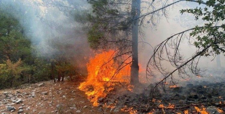 Muğla'da 3 günde 37 yıldırım yangını