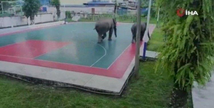 Çin'de yabani filler polis karakoluna girdi