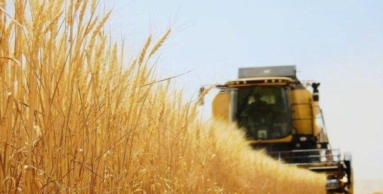 Tarım-GFE yıllık yüzde 29,38 arttı