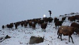 Yaylalardan indirilmeye başlanan koyun sürüsü kar, tipiye yakalandı