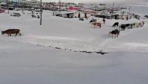 Kar etkili oldu, yaylacıların dönüş hazırlıkları erken başladı