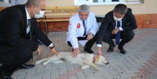 Elazığ Belediyesi 'can dostlarımızı' unutmadı