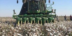 Mardin'in Kızıltepe Ovası'nda pamuk hasadı başladı