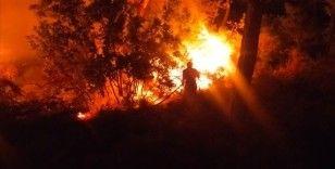 Bodrum'da çıkan orman yangını söndürüldü