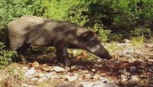 DKMP fotokapana takılan yabani hayvanların görüntüsünü paylaştı