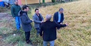 Edirne'de dolunun vurduğu 13 bin dönümlük çeltik arazisinde hasar tespiti
