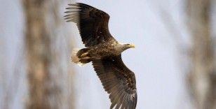 Yıllarını verdi, 280 farklı kuş türünü fotoğraflamayı başardı