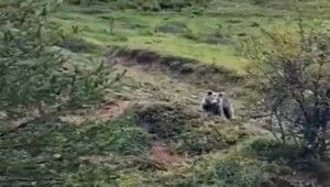 Yolda karşılaştığı ayıya böyle seslendi