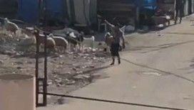 Adana'da film sahnelerini aratmayan silahlı çatışma
