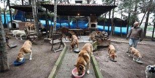 Sokaktan kurtardığı onlarca hayvan rahat yaşasın diye şehirden köye taşındı